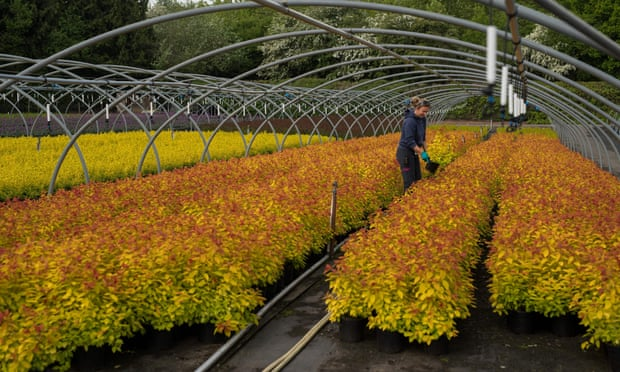 UK garden centres prepare for sales surge to end lockdown disaster