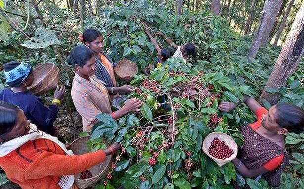 Can coffee growers deploy MGNREGA workers?