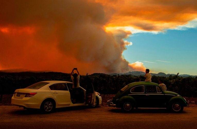 Social Media Buzz: Trump Tweet, Musk Blasts Gates, Wildfires