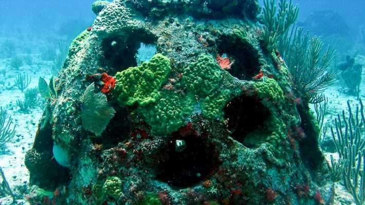 Florida company utilizes human remains to create coral reefs for memorials