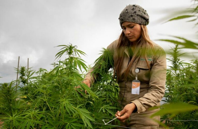 These pot stocks are poised to win big under Biden