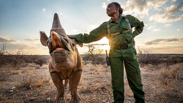 Fact check: Did a company 3D-print rhino horns to help slow down poaching? Yes, but it didn't last long